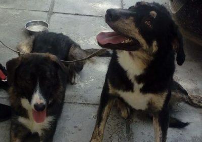 Unsere Hunde Tierschutzverein Landkreis Erding E V